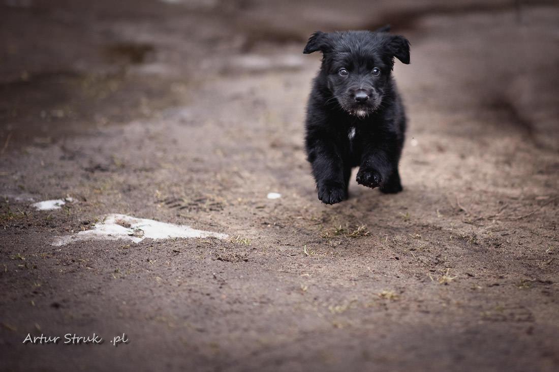 Ósemka | nasz psiak :)